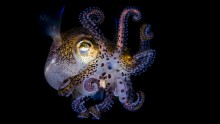 Incredible sea creatures Underwater Pictures