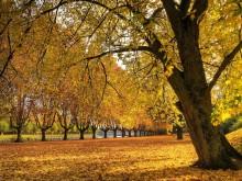 Autumn nature pics Flora Pictures Forest