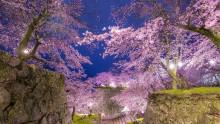 Blossoming Japan Blooming Sakura