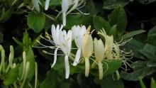 Mediterranean Flowers Flowers